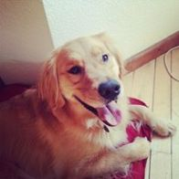 Kinley The Golden - Happy New Year